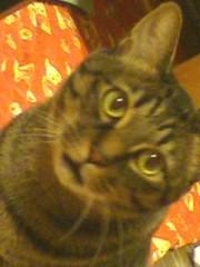あやか(クキプロ) 公式ブログ/あやかの愛猫 画像1