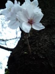 東條公美 公式ブログ/お花見 画像2