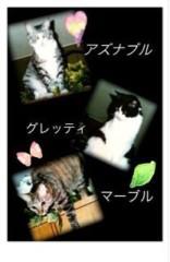 安倍絵麗奈( 安倍エレナ ) 公式ブログ/読みたかった本 画像1