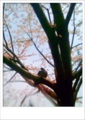 安倍絵麗奈( 安倍エレナ ) 公式ブログ/桜と鳩 画像1