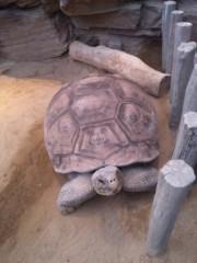 長尾祐哉 公式ブログ/上野動物園 画像2