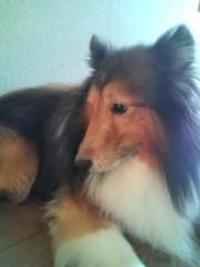 長尾祐哉 公式ブログ/愛犬 画像1
