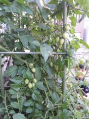 田村月子 公式ブログ/月・星?農園 画像2