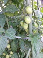 田村月子 公式ブログ/月・星?農園 画像1