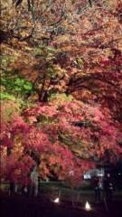 石井あす香 公式ブログ/紅葉ライトアップ 画像2