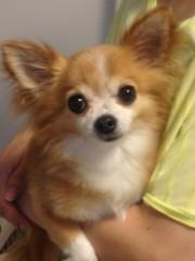 比留間佳愛(La☆DoLL) 公式ブログ/愛犬。 画像1