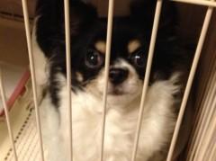 比留間佳愛(La☆DoLL) 公式ブログ/愛犬。 画像2