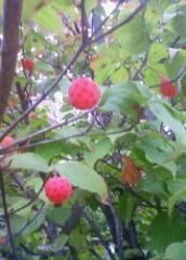 マナ 公式ブログ/赤い実 画像3