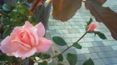 マナ 公式ブログ/少しの勇気!! 画像1