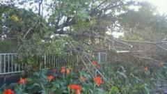 マナ 公式ブログ/大木が・・・ 画像2