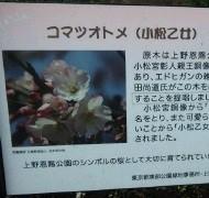 マナ 公式ブログ/上野の桜 画像2