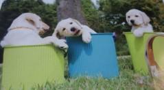 マナ 公式ブログ/盲導犬! 画像1