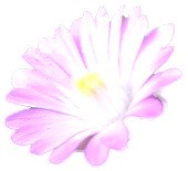 マナ 公式ブログ/祈り 画像1