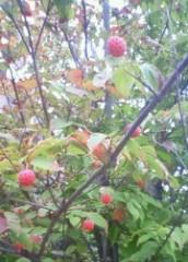 マナ 公式ブログ/赤い実 画像2
