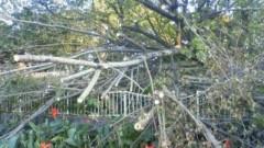 マナ 公式ブログ/大木が・・・ 画像1