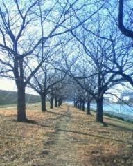 マナ 公式ブログ/冬の桜!! 画像2