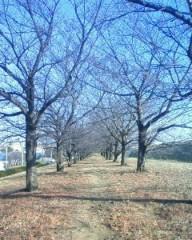 マナ 公式ブログ/冬の桜!! 画像1
