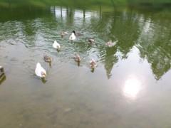 伊藤麻香 公式ブログ/雨やばいー(;´д`) 画像3