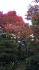 梅田みか 公式ブログ/紅葉。 画像1