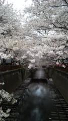 梅田みか 公式ブログ/目黒川。 画像1