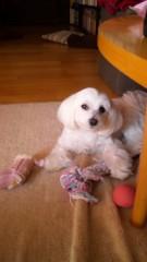梅田みか 公式ブログ/リリーの誕生日。 画像1