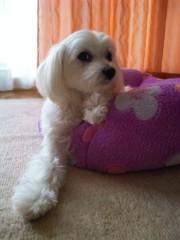 梅田みか 公式ブログ/リリーのソファー。 画像1