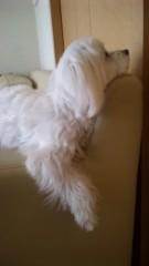 梅田みか 公式ブログ/我が家のソファー。 画像1