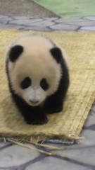 梅田みか 公式ブログ/パンダ。 画像1