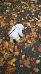 梅田みか 公式ブログ/リリーと散歩 画像1