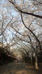 はづき ゆうな 公式ブログ/お花見三昧 画像3