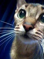 小林万桜 公式ブログ/猫林まおです笑 画像3