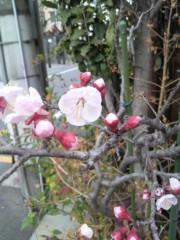 絵理子 公式ブログ/桜の花 画像1