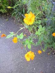 絵理子 公式ブログ/お花 画像1