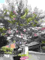 絵理子 公式ブログ/百日紅 画像1