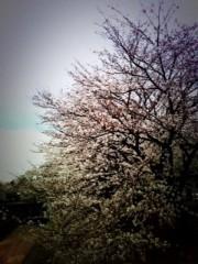 阿部亮平 公式ブログ/桜 画像1