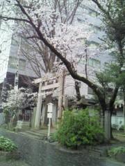 今村俊史 公式ブログ/桜(*ymy*) 画像2