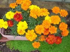 梅田絵理子 公式ブログ/ガーデン 画像1