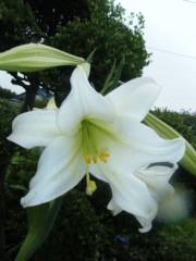 梅田絵理子 公式ブログ/garden 画像1
