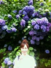 梅田絵理子 公式ブログ/明月院の紫陽花 画像2