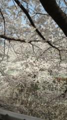 梅田絵理子 公式ブログ/桜 画像2