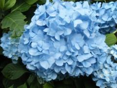 梅田絵理子 公式ブログ/明月院の紫陽花 画像3