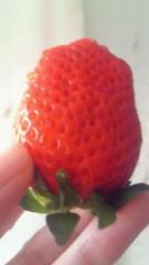 梅田絵理子 公式ブログ/誕生日はイチゴの日 画像2