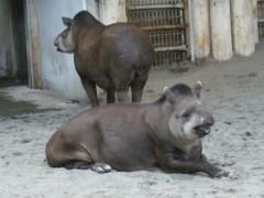 梅田絵理子 公式ブログ/上野動物園 画像2