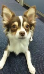 John 公式ブログ/看板犬… 画像1
