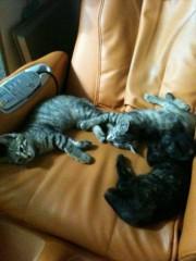 John プライベート画像/PETS 猫ちゃんたち。。。 IMG_2204