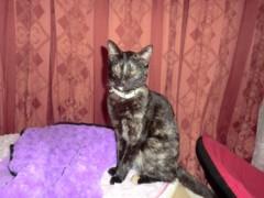 John プライベート画像/PETS 猫ちゃんたち。。。 CIMG0775