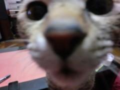 John プライベート画像/PETS 猫ちゃんたち。。。 CIMG0768