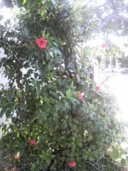 木下博勝 公式ブログ/この花はなんでしたっけ? 画像1