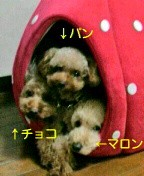 三枝夕夏 IN db 公式ブログ/☆私の宝物☆ 画像2