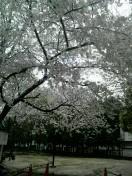 三枝夕夏 IN db 公式ブログ/☆雨の日の散歩☆ 画像1